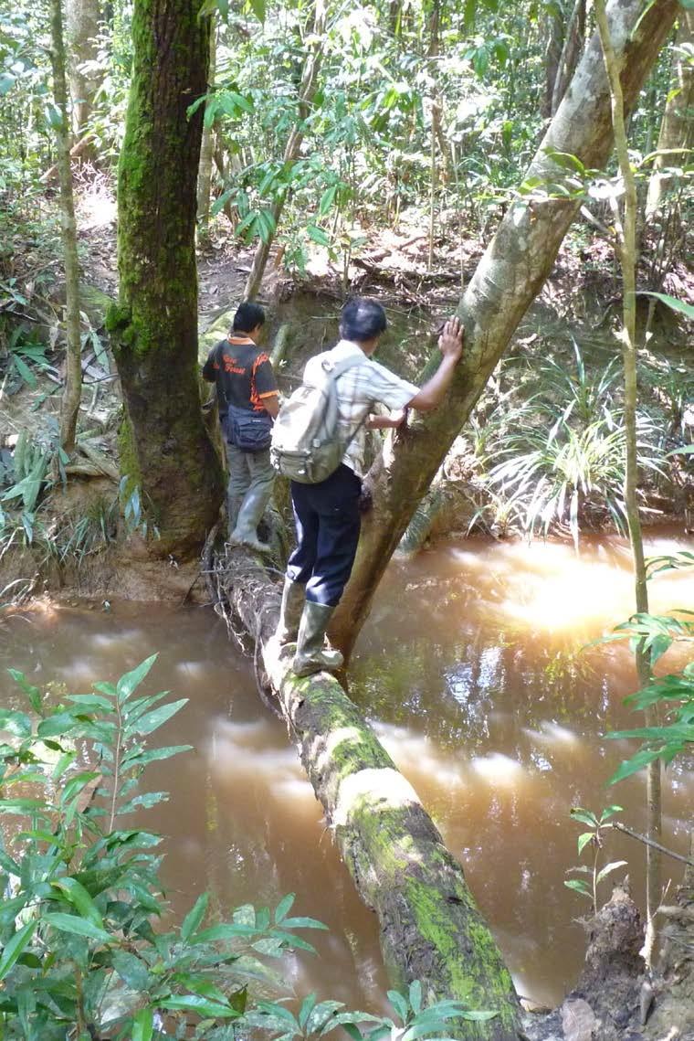 BUKAN AKROBAT: Menyibak semak, melewati sungai dengan pohon yang roboh sebagaijembatannya. Penjelajahan yang menantang nyali.