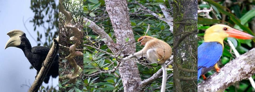 PENYEJUK MATA: Di dalam hutan yang masih cukup perawan, keanekaragaman hayatibanyak ditemui. Butuh kesabaran. Dan jika beruntung, burung-burung langka, dan jugaaneka satwa lainnya, bisa dilihat di sini.