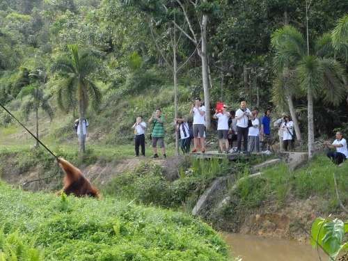 Melihat orangutan di Samboja Lestari (Afif/detikTravel)