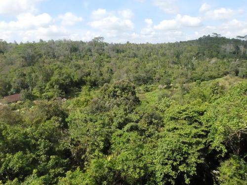 Pemandangan dari Samboja Lodge (Afif/detikTravel)